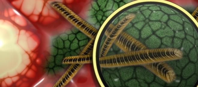 Microrganismos são os mais antigos na Terra.