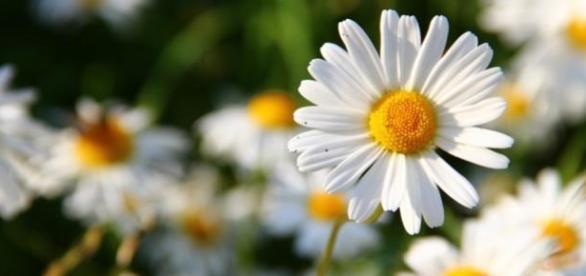 Senar oferece cursos gratuitos de floricultura
