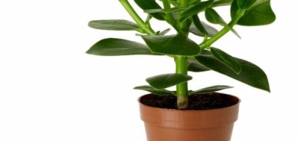O planta ingrijita in mod corespunzator