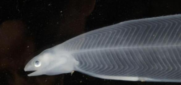 De drôles de spécimens trouvés sous l'eau