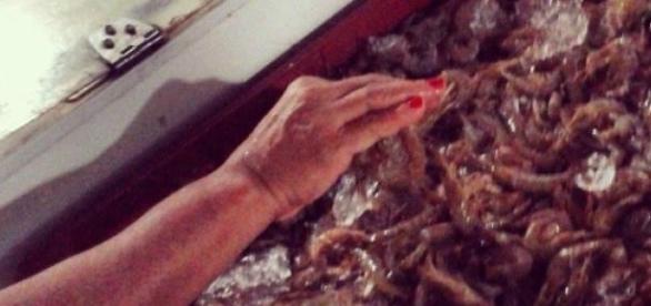 Turista escolhe camarão em mercado no litoral