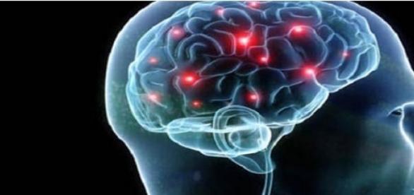 viermele invadeaza creierul uman