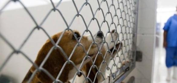 Testes em animais como cães são os mais comuns.