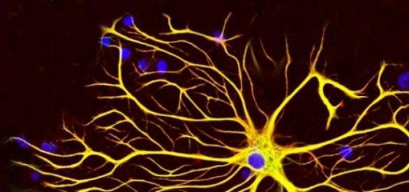 El cerebro es un dispositivo electromagnético