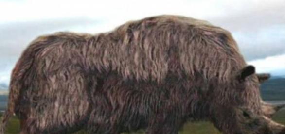 El mamífero fue protagonista de la Edad de Hielo
