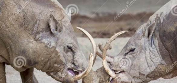 Babirasa, denumit si porcul-cerb