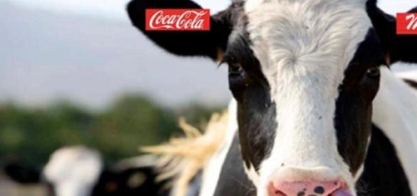 "Coca-Cola se lanza al sector lacteo con ""Fairlife"""