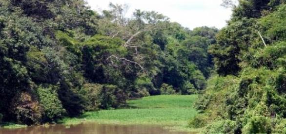 Rio Tefé no Amazonas (Wikipedia)