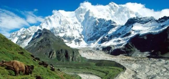 Rasina miraculoasa din Tibet