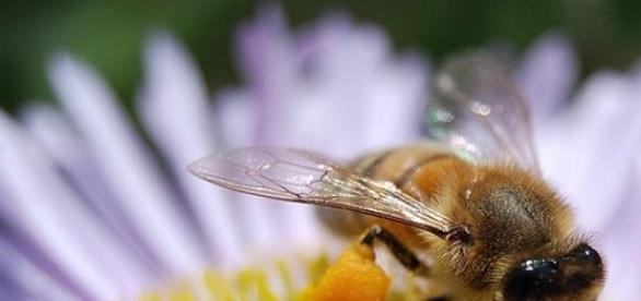 Aveti grija la intepaturile insectelor