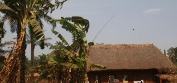 Lebensweise in Zentralafrika