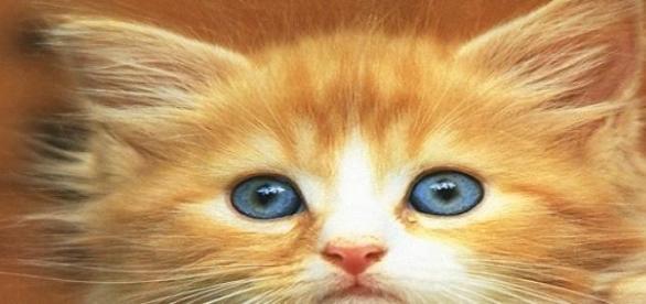 Torsul de pisica prezinta efecte pozitive