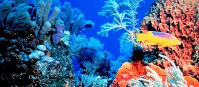 O echipa de cercetatori oceanici doresc lansarea unui maret proiect prin care propun modificarea genetica a speciilor de corali existenti in marea bariera