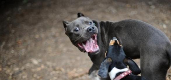 Penas para perros peligrosos
