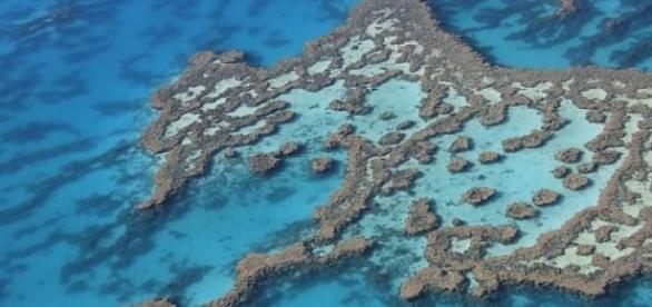 La Grande barrière de corail est en grand danger.