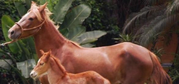 Los caballos: su historia y características