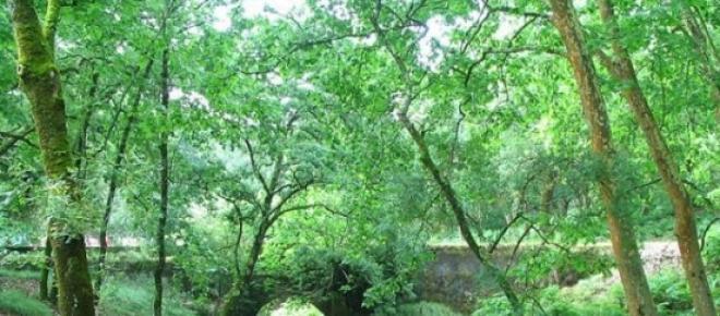A tapada de Mafra para além de ter uma fauna e uma flora incrível, promove a saúde e bem estar.
