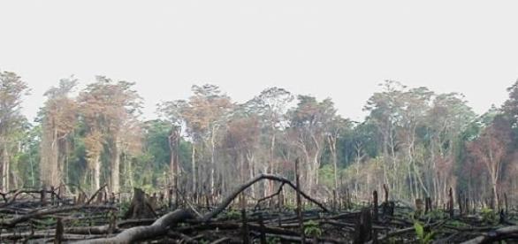 Son cifras alarmantes para la ecología mundial