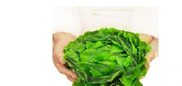 Salata verde o sursa excelenta pentru sanatate
