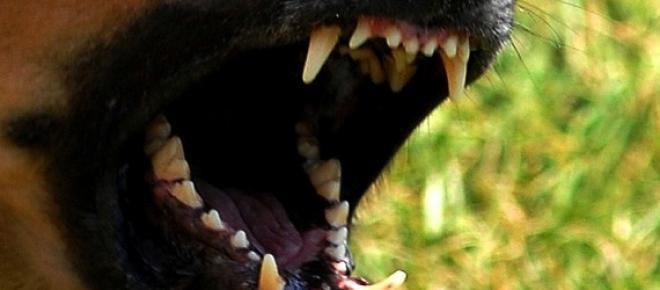 Cão foge do seu quintal e ataca cão pequeno. A dona leva caso a tribunal e recebe 7500 euros de indemnização pela perda.