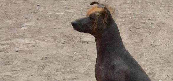 Los perros son los animales con más memoria