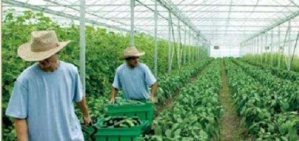 Sectorul rural va fi salvat de agricultura