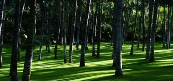 Cemitérios no futuro podem ser tornar florestas