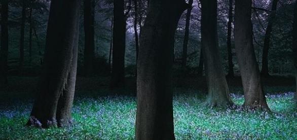 Padurea Baciu, cea mai fotografiata din Romania