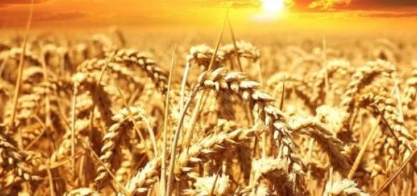 Cargill, Ambev e Ultragaz selecionam estagiários
