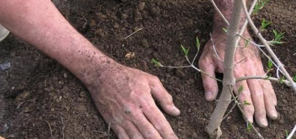 Doi barbati au plantat peste 10.000 de copaci