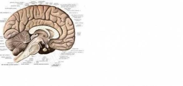 Creierul uman ne pacaleste