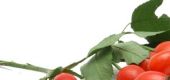 Macesele, izvor de vitamina C