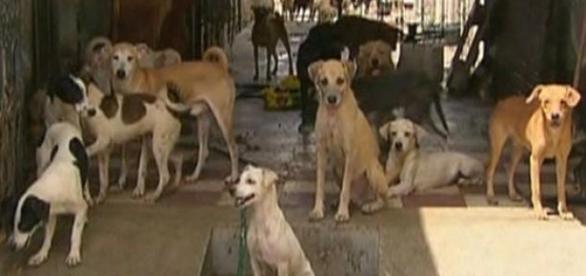 Cerca de 70 cachorros foram encontrados no imóvel
