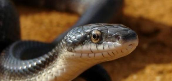 Afla de ce nu exista serpi in Irlanda