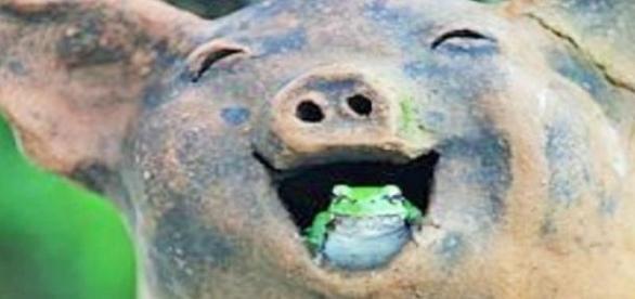 Sorria mesmo que, às vezes, tenha que engolir sapo