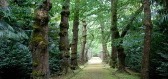 Parque Terra Nostra é reconhecido mundialmente