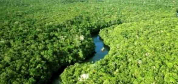 Floresta amazônica uma das duas preservadas