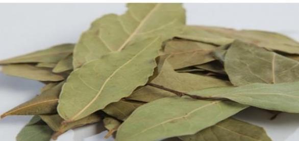 Frunzele de dafin si beneficiile lor
