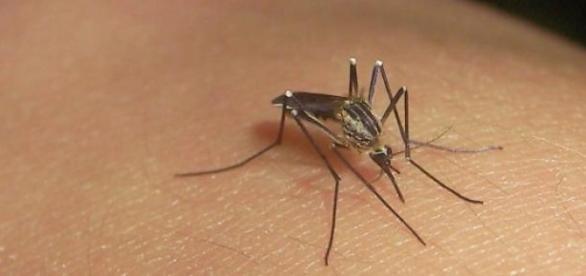 Número de casos de dengue sobe mais de 200%
