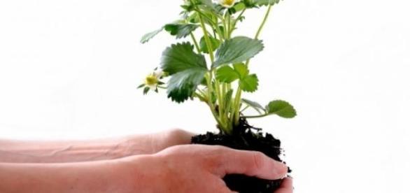 USP oferece curso gratuito de ecologia