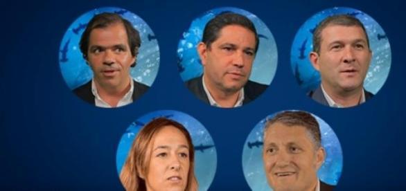 Estes são os cinco tubarões portugueses.