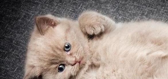 Pisica- terapeutul care vindeca.