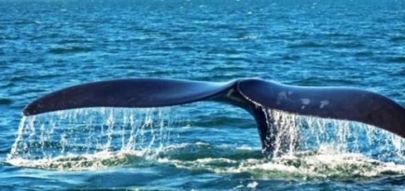Projeto Baleia Franca abre inscrições