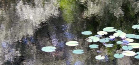 Ivonne Jäger  / pixelio.de