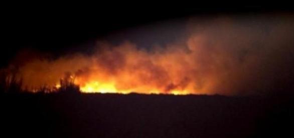 Les flammes ravagent la végétation.