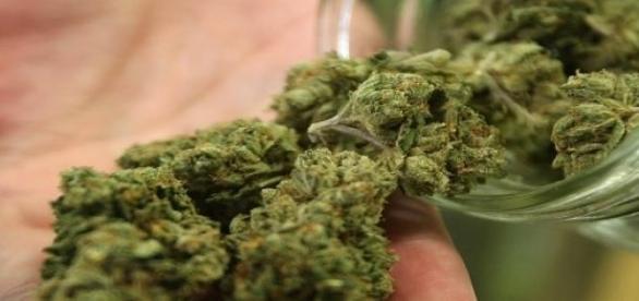 Marijuana - medicament sau drog?