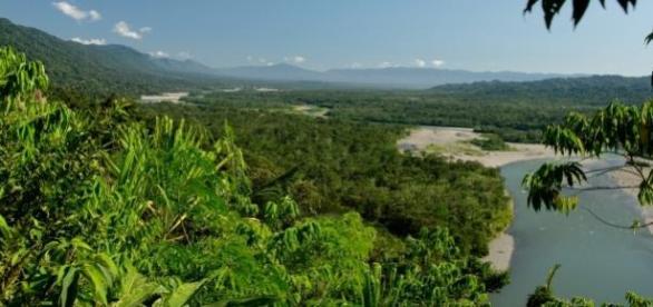 Vaga para bolsista: florestas tropicais