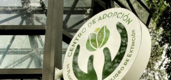 Adopción responsable de plantas en extinción