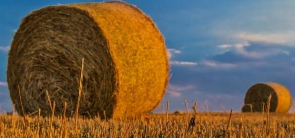 Monsanto oferece vagas para estágio.