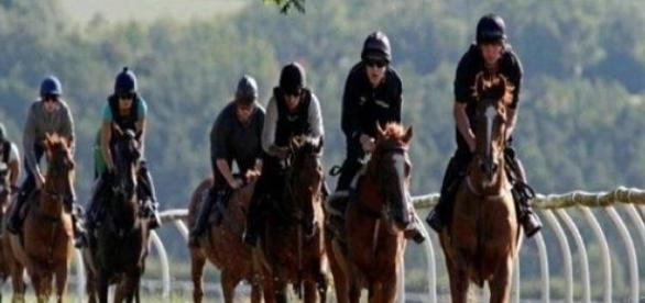 Racehorses must arrive at the course in peak form